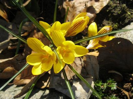 FOTKA - žlutá :)