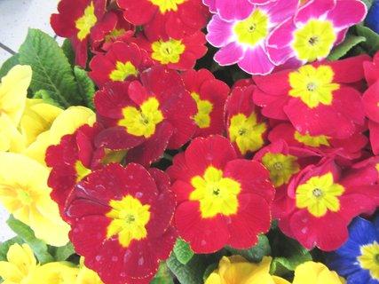 FOTKA - květináčkové