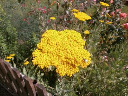FOTKA - nejžlutější žlutá