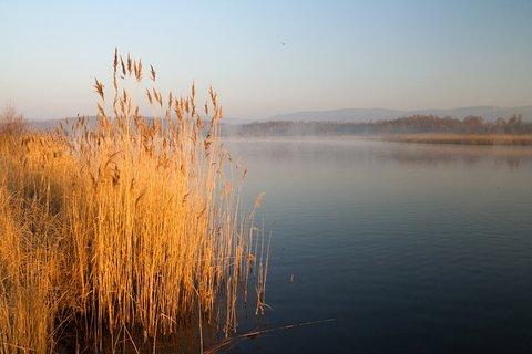 FOTKA - V ranním světle