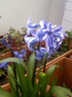 FOTKA - kvetl už v únoru