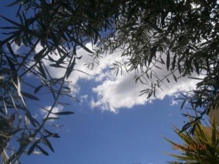 FOTKA -  siesta pod olivovníkem