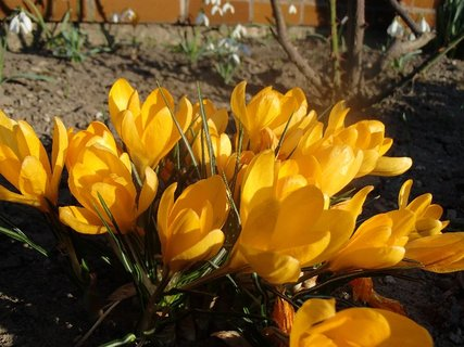FOTKA - v záhrade na slniečku