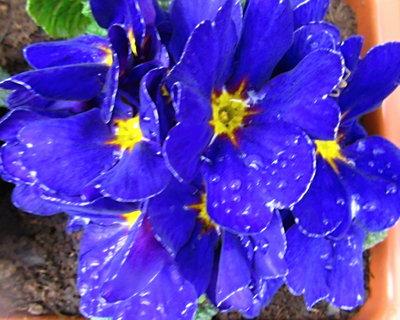 FOTKA - modrá po dešti