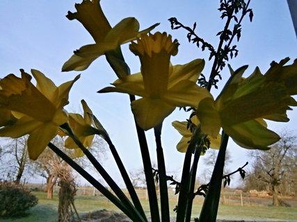 FOTKA - Jarní pohled z okna..