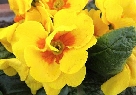 FOTKA - ještě žlutý