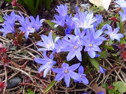 FOTKA - modrá jarní krása