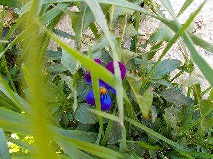 FOTKA - schovaná v trávě