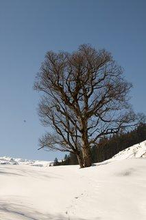 FOTKA - Baumzipfelweg v zimě - Strom u cesty