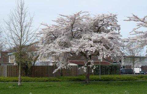 FOTKA - strom samy kvitek