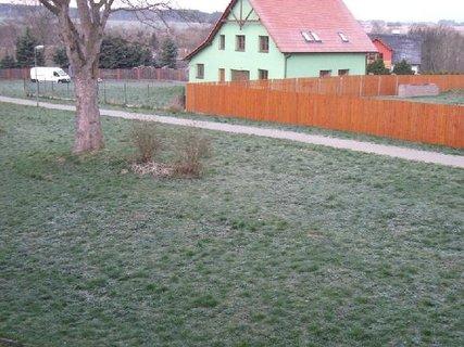 FOTKA - ranní mrazík na  trávě  18.4.