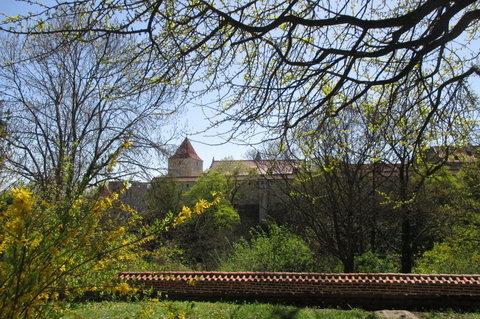 FOTKA - Pohled z Královské zahrady k Pražskému hradu