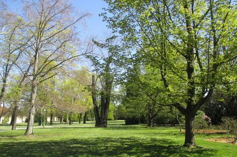 FOTKA - Památné stromy v Královské zahradě