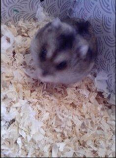 FOTKA - Můj křeček Pusinka