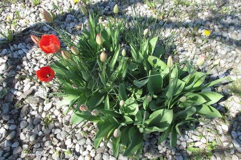 FOTKA - Sídliště v květu - záhonek i u hlavní slinice