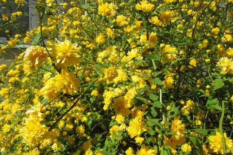 FOTKA - Sídliště v květu - ve žuté