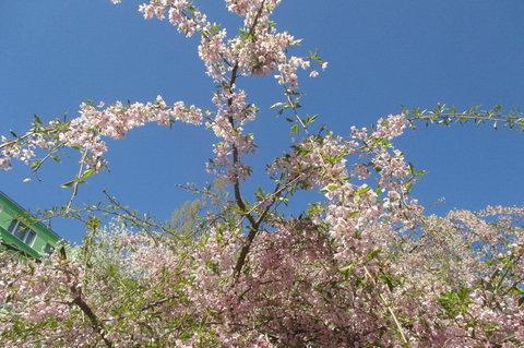 FOTKA - Sídliště v květu - a slunci