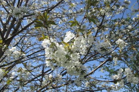 FOTKA - Sídliště v květu - pohled k nebi