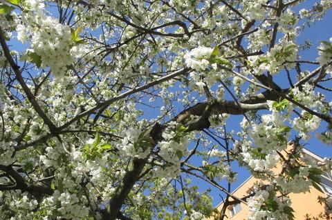 FOTKA - Sídliště v květu - i pohledy z oken jsou příjemnější