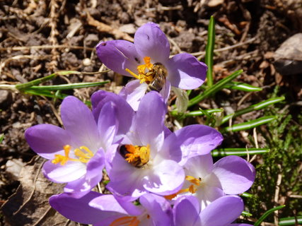 FOTKA - Včelky  mlsají