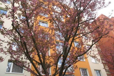 FOTKA - Dnešní den na sídlišti - mezi květy