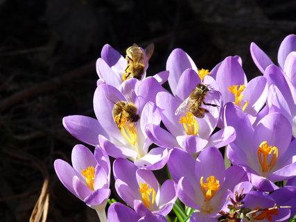 FOTKA - Pracovité včelky