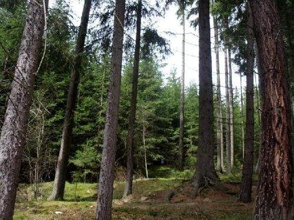 FOTKA - les - procházka přírodou