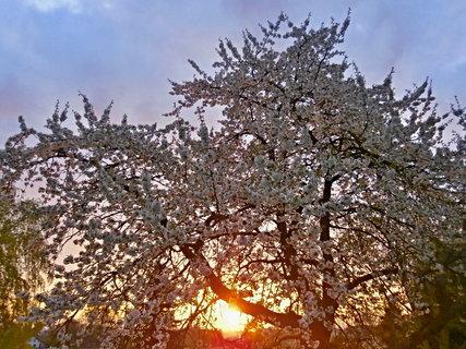 FOTKA - Čas na májové políbení pod rozkvetlým stromem....