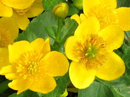 FOTKA - kvetly u Hostětína