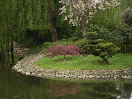 FOTKA - Červený javor a jehličnan