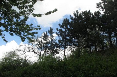 FOTKA - Zeleň na sídlišti
