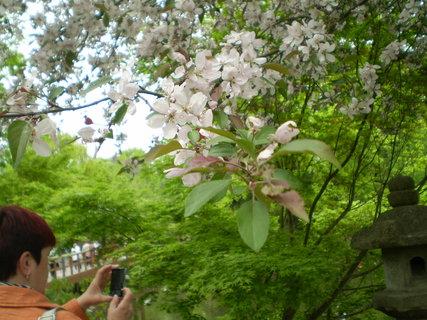 FOTKA - Rozkvetlý strom a kamenná soška
