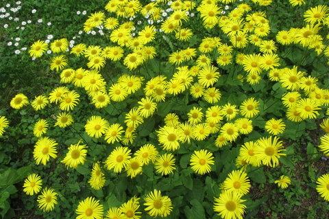 FOTKA - ...je jaro, je jaro a kvetou....