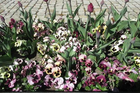 FOTKA - Jaro v Rajské zahradě