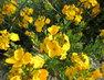 žluté kvítky + plot