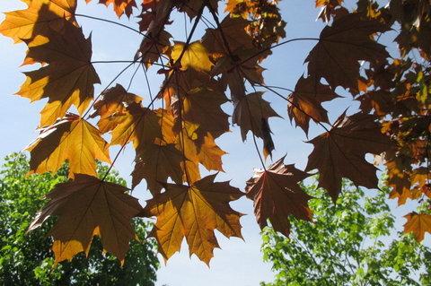 FOTKA - Barva podzimu  v květnu