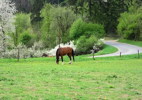 FOTKA - Na pastvě u Bojkovic