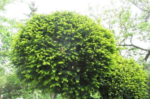 FOTKA - Z procházky - nádherná zahrada. stromky do kulata