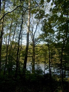 FOTKA - stromy a vlevo rybník, nad ním slunko