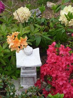 FOTKA - Azalka + rododendrony