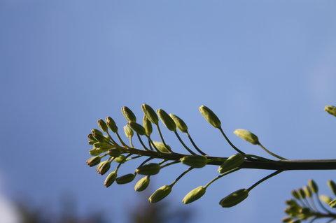 FOTKA - ch�est- taky kvete