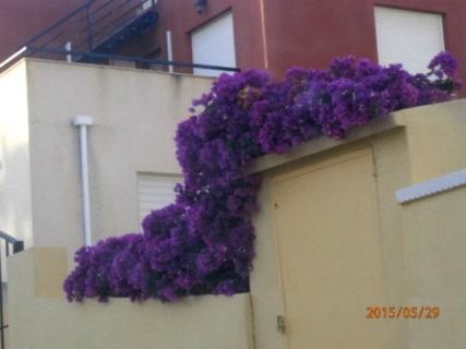 FOTKA - kvetou sice celoročně,ovšem nyní jsou překrásné