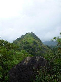 FOTKA - Zelená Srí Lanka