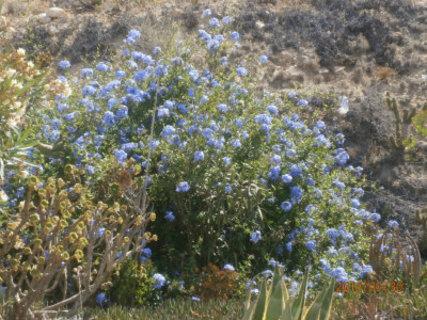 FOTKA - kvetou na písku mezi kaktusy a keříky