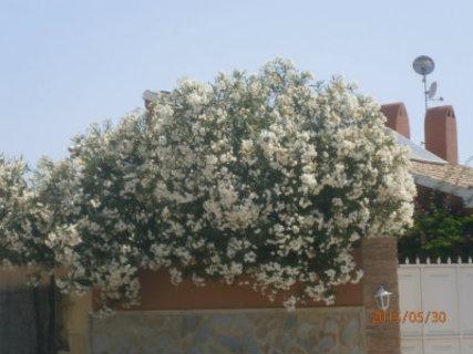 FOTKA - v máji vše kvete nejlépe