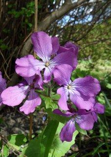 FOTKA - fialove kvety