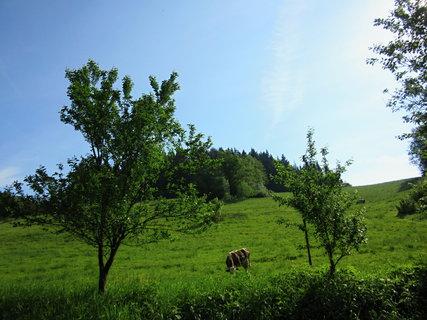 FOTKA - Pastvina