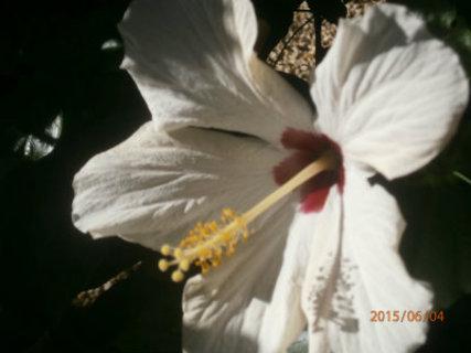 FOTKA -  včelka si pochutná
