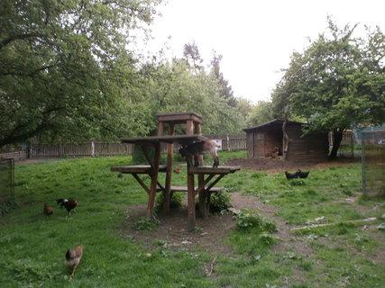 FOTKA - kozy a slepice