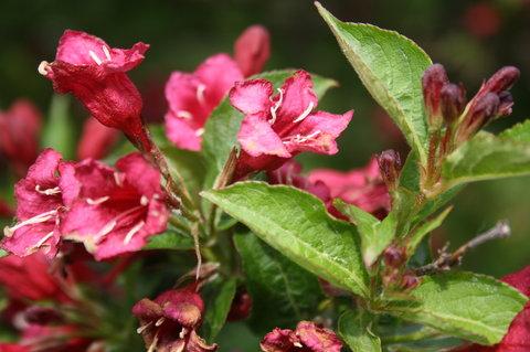 FOTKA - rozkvetly do kr�sy.